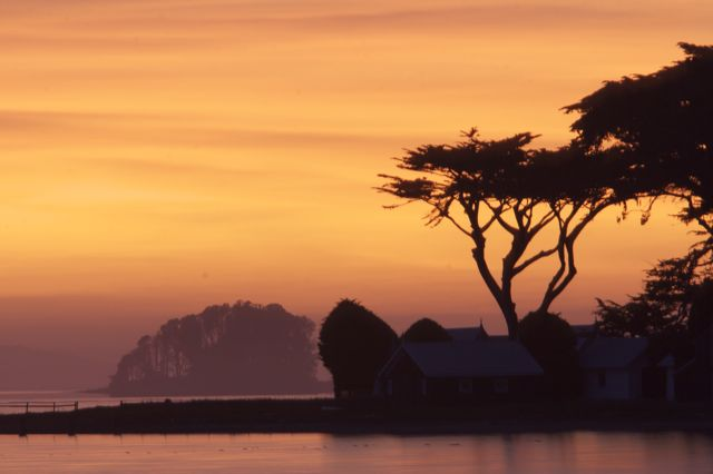 Cypress Grove at Sunset
