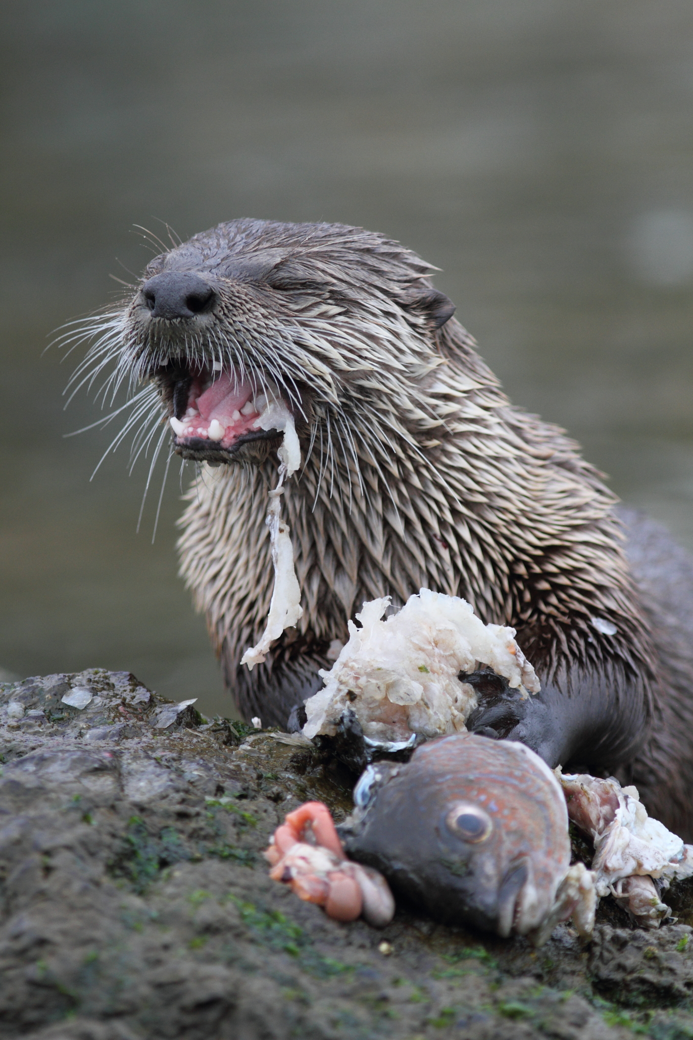 Anatomy Of A Photo How Do I Photograph An Otter Eating A Fish