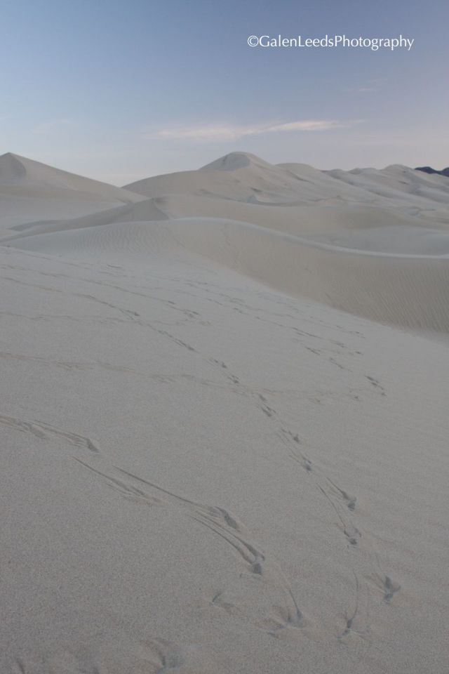 Raven Tracks in the Eureka Sand Dunes, Death Valley National Park