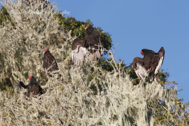 The vultures at least seemed relaxed